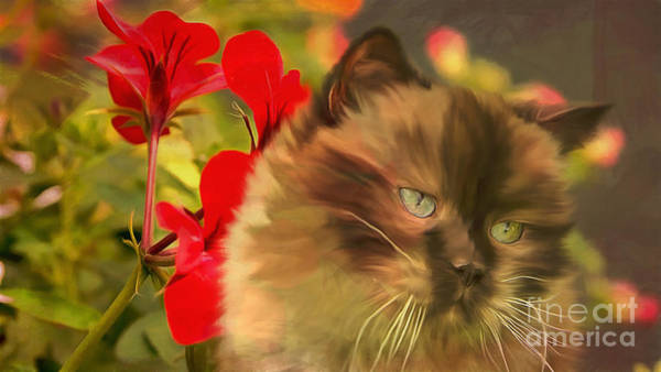 Digital Art - Dreamy Cat With Geranium 2015 by Kathryn Strick