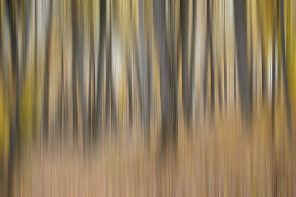 Impressionist Photograph - Dreamy Forest by Tom Mc Nemar