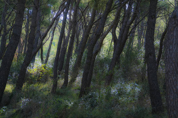 Photograph - Dreamy Marjan Forest In Croatia by Sven Brogren