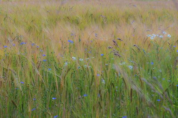 Photograph - Dreamy Meadow by Ian Thompson