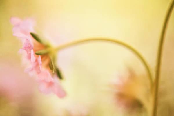 Wall Art - Photograph - Dreamy Pink Flower by Bonnie Bruno