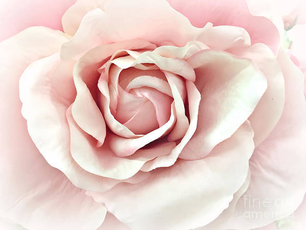 Wall Art - Photograph - Blush Pink Rose - Romantic Pastel Pink Shabby Chic Rose Closeup - Watercolor Roses  by Kathy Fornal