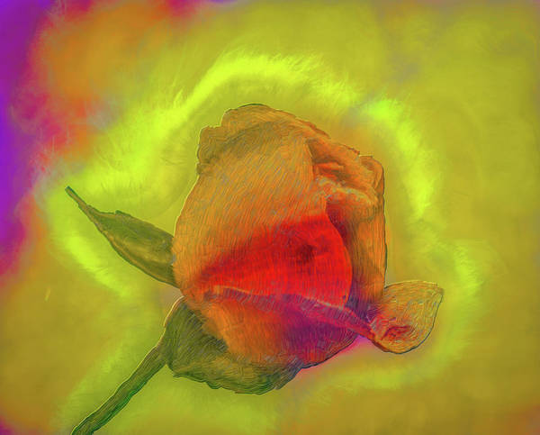 Photograph - Dreamy Rose Fantasy #h2 by Leif Sohlman