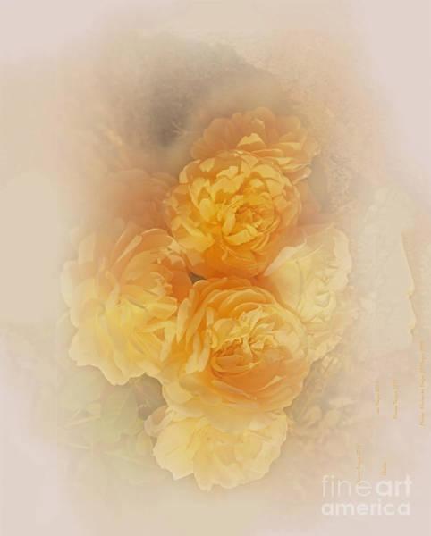Photograph - Dreamy Roses by Elaine Teague