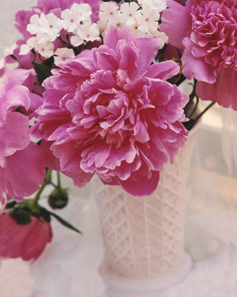 Peonies Photograph - Dreamy Shabby Chic Pink Peonies In Pink Vase - Summer Hot Pink Peonies by Kathy Fornal