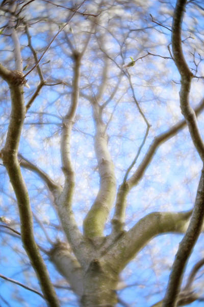 Photograph - Dreamy Tree by Brian Hale