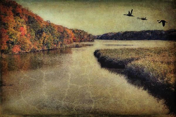 Photograph - Dreary Autumn by Reynaldo Williams