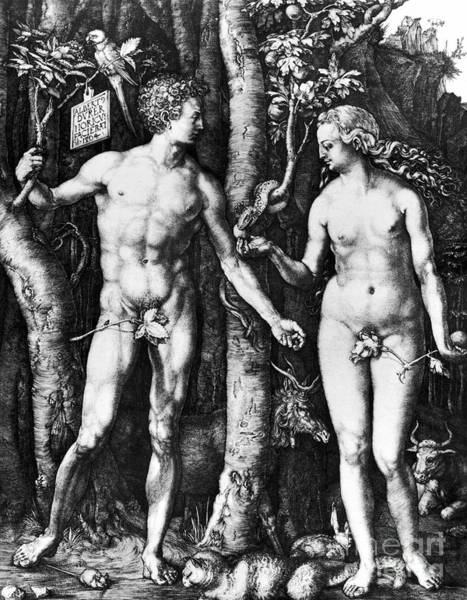 Photograph - Durer - Adam And Eve, 1504 by Granger