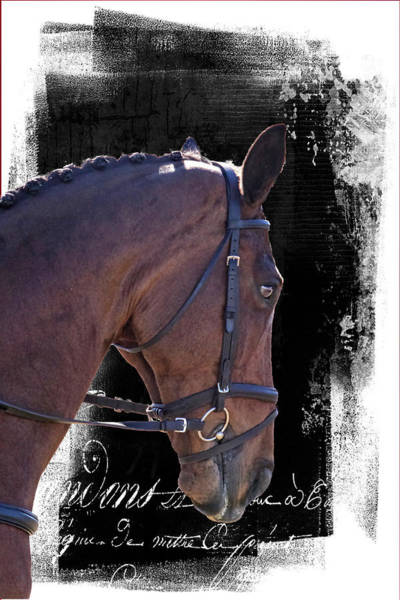 Photograph - Dressage Buttons by Alice Gipson