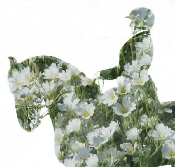 Photograph - Dressage In White Flowers by Alice Gipson
