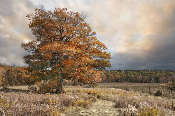 Photograph - Dressed In Autumn by Robin-Lee Vieira