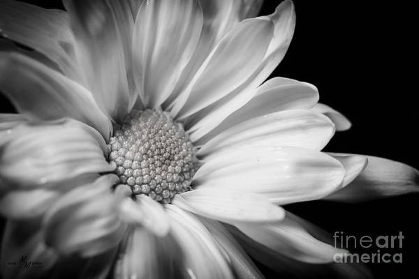 Wall Art - Photograph - Dressed In Black And White by Mechala Matthews