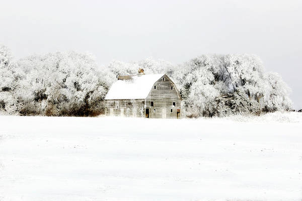 Photograph - Dressed In White by Julie Hamilton