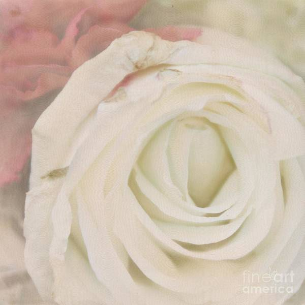 Wall Art - Photograph - Dressed In White Satin by Cindy Garber Iverson