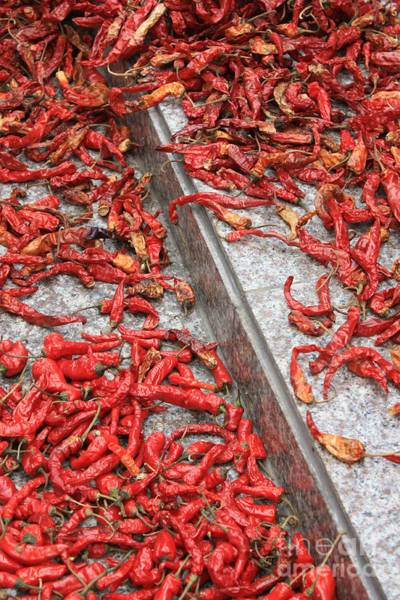 Photograph - Dried Chili Peppers by Carol Groenen