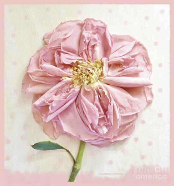 Wall Art - Photograph - Dried Fabric Rose On Dots by Marsha Heiken