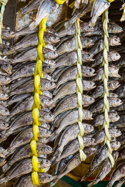 Photograph - Dried Fish by James BO Insogna