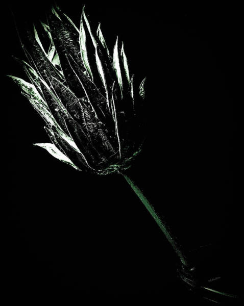 Photograph - Dried Flower Still Life by Donna Lee