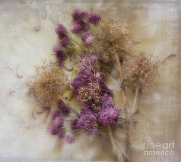 Photograph - Dried Flowers by Ann Jacobson