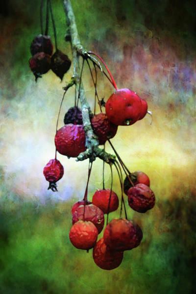 Photograph - Dried Fruit 5588 Dp_2 by Steven Ward