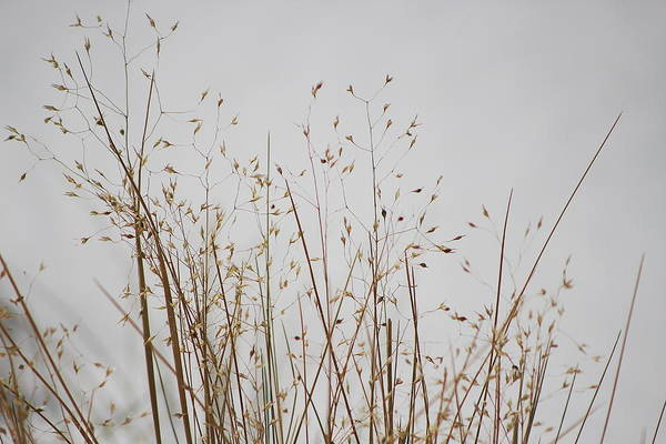 Photograph - Dried Grass At White Sands by Colleen Cornelius
