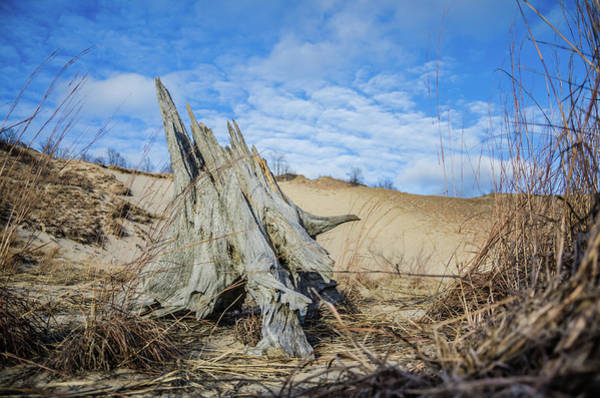 Photograph - Dried Stump At Warren Dunes by Ryan Ketterer
