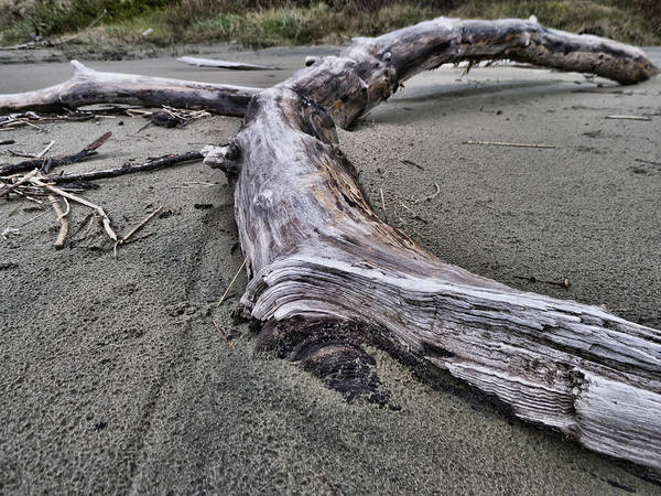 Photograph - Drift Log On The Beach by HW Kateley