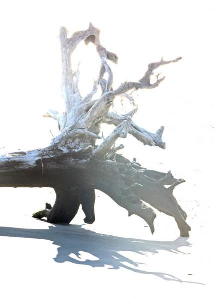 Drift Wood Art Print