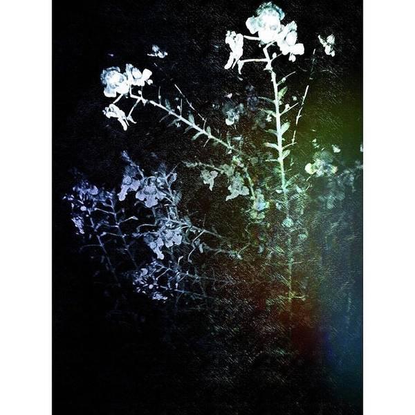 Growing Up Digital Art - Drifting Dawn by Julia Beck