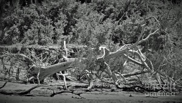 Photograph - Drifting Memories by D Hackett