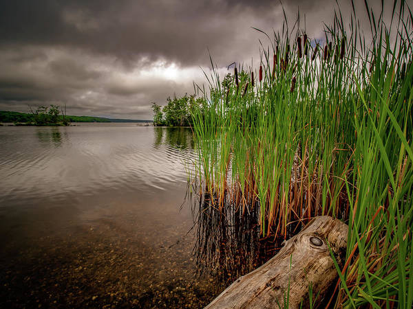 Photograph - Driftwood And Cattails  by Bob Orsillo