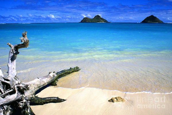 Photograph - Driftwood And Islands by Thomas R Fletcher
