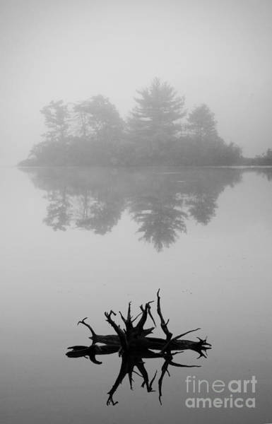 Photograph - Driftwood And Lake by Dave Gordon