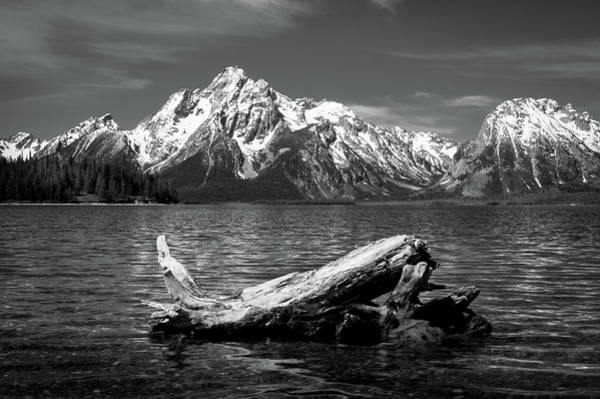 Photograph - driftwood and Mt. Moran by Stephen Holst