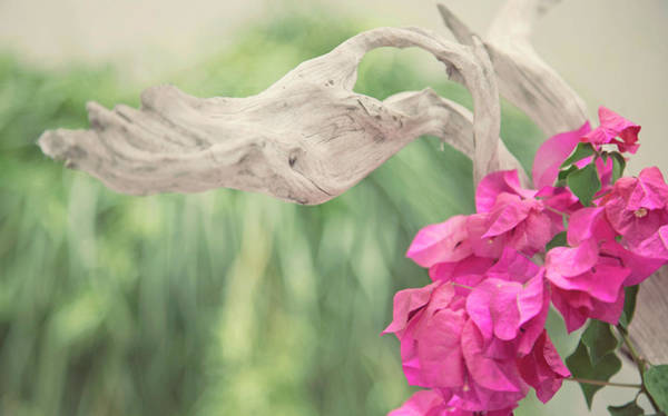 Wall Art - Photograph - Driftwood And Pink Petals by Toni Hopper