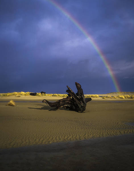 Photograph - Driftwood And Rainbow by Robert Potts
