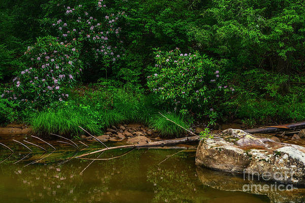 Photograph - Driftwood And Rhododendron by Thomas R Fletcher