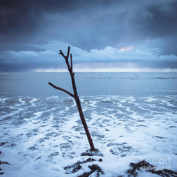 Photograph - Driftwood And Stormclouds by Keith Morris