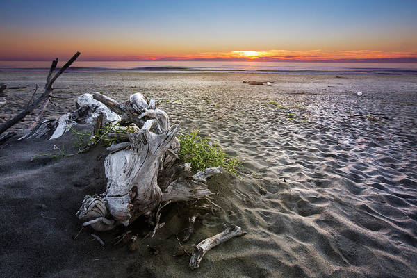 Photograph - Driftwood At Sunset by Debra and Dave Vanderlaan