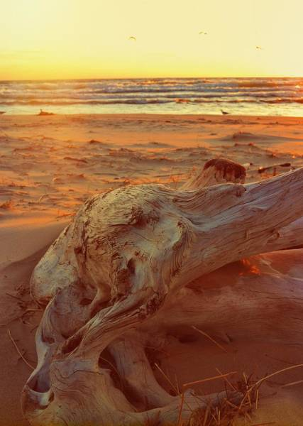 Photograph - Driftwood At Sunset by Michelle Calkins