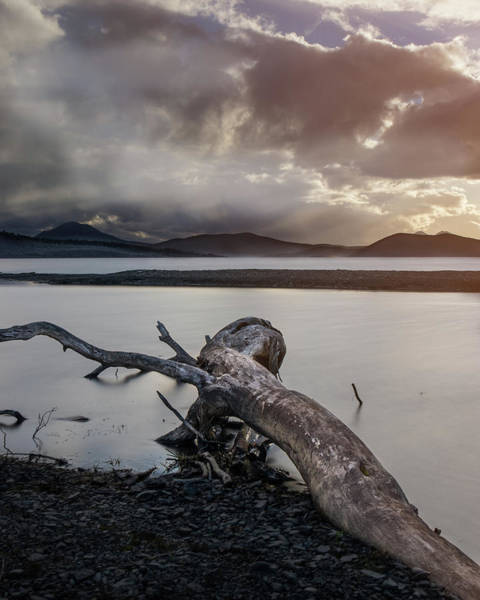 Photograph - Driftwood At The End Of The World by Dalibor Hanzal