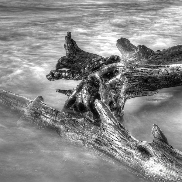 Drift Photograph - Driftwood At Whitefish Point by Twenty Two North Photography