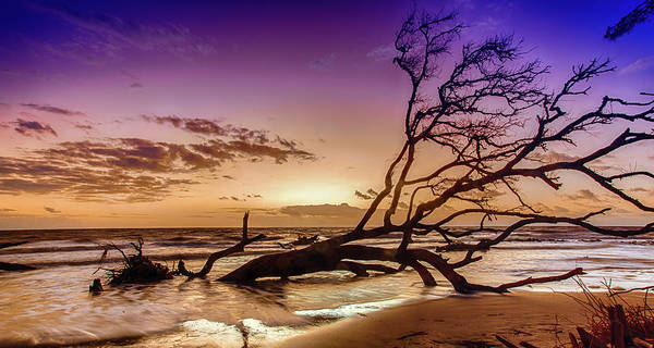 Driftwood Beach 2 Art Print