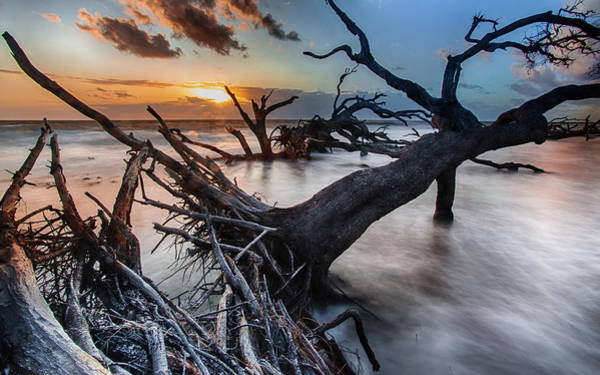 Driftwood Beach 6 Art Print