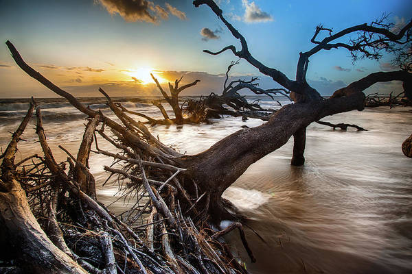 Driftwood Beach 7 Art Print