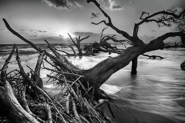 Driftwood Beach 8 Art Print