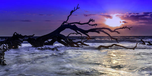 Driftwood Beach 9 Art Print
