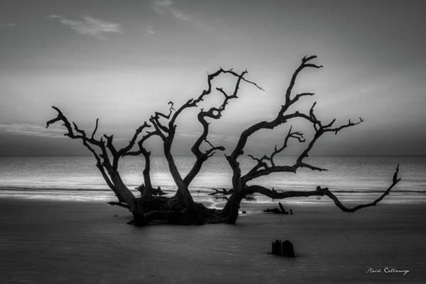 Photograph - Driftwood Beach Dawn Jekyll Island Georgia by Reid Callaway