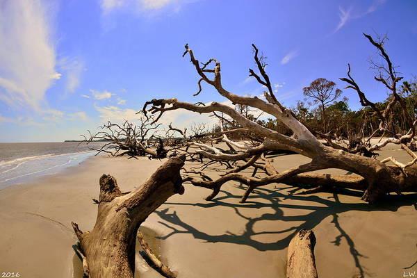 Wall Art - Photograph - Driftwood Beach Hunting Island Beaufort Sc by Lisa Wooten