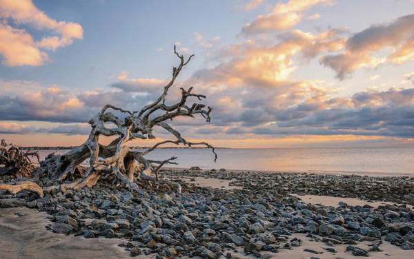 Wall Art - Photograph - Watching The Sun Rise On Driftwood Beach  by Andrew Wilson